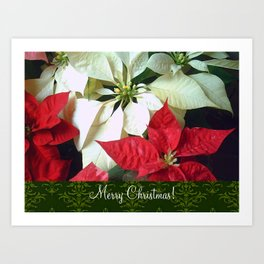 Mixed Color Poinsettias 2 Merry Christmas S6F1 Art Print