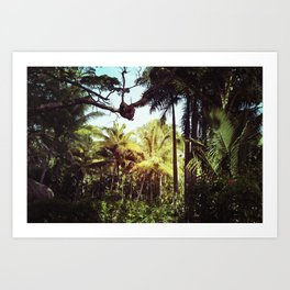 Sunlit Palm Art Print