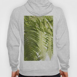 House Plant Fern Leaf Silhouette Sunlight Zen Photo Hoody