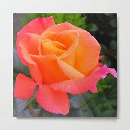 Close Up Orange Pink Rose Metal Print