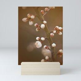 late sun blossoms Mini Art Print