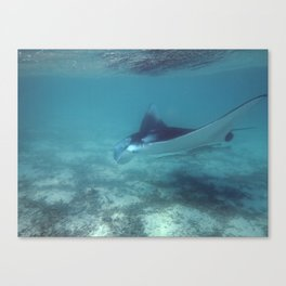 Manta by the shore Canvas Print