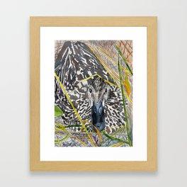 Mallard Duck Painting Framed Art Print