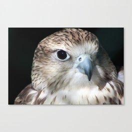 Saker Falcon 2 Canvas Print
