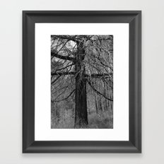 + Tree Framed Art Print