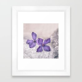 Zen Soft Pastel Purple Clematis Blossom Framed Art Print