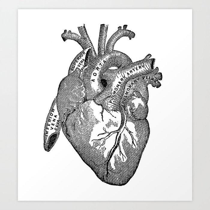 Vintage Anatomy Heart Art Print by nectartea | Society6