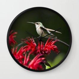 Hummingbird on Flowers Wall Clock