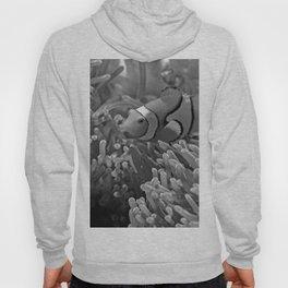 Clown Fish (Black and White) Hoody