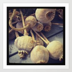 poppy pods Art Print