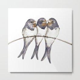 Three young swallows Metal Print