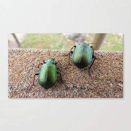 Iridescent  Green Beetles Canvas Print