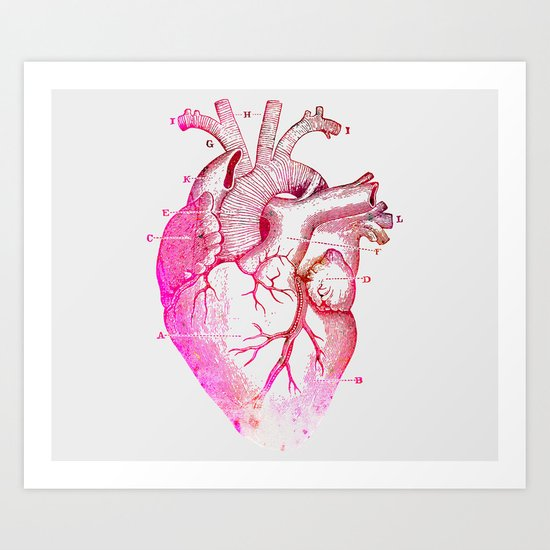 Anatomy Of The Heart Art Print
