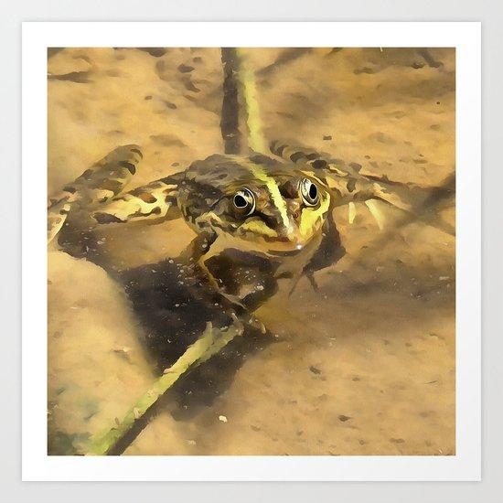 Marsh Frog Art Print