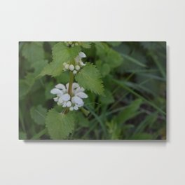 Close up of a nettle Metal Print