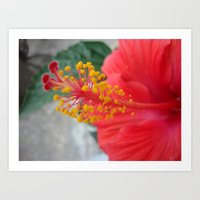 hibiscus Art Prints featuring Hibiscus by BACK to THE ROOTS