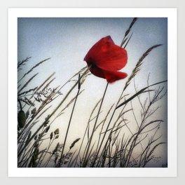 poppy no.5 Art Print