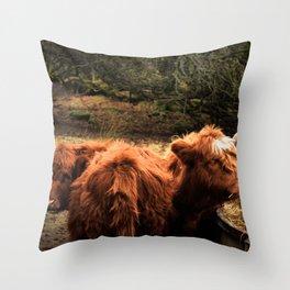 Highland Coos Throw Pillow