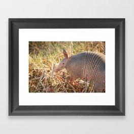 Armadillo at Sunset Framed Art Print