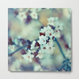 Cool Morning Cherry Blossoms Metal Print