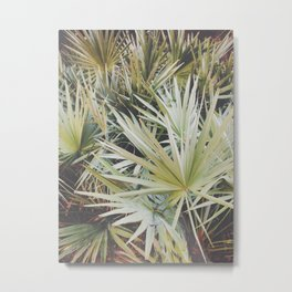 Palmettos in Florida Metal Print