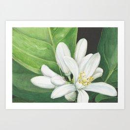 Watercolor Orange Blossom Art Print