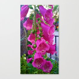 Lovely Pink Flowers 1 Canvas Print
