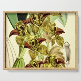 Grammatophyllum stapeliiflorum (as Cymbidium huttonii) Curtis' 93 (Ser. 3 no. 23) pl. 5676 (1867) Serving Tray