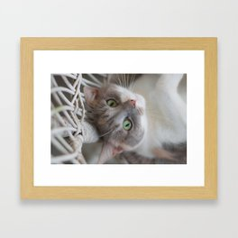 Dilute Calico of the Cute Variety Framed Art Print