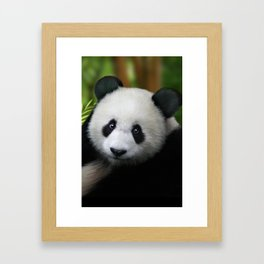 Giant Panda Cub Framed Art Print