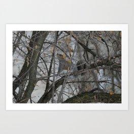 Squirrel !  Art Print