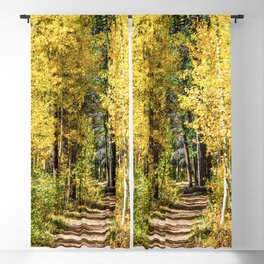 Yellow Tree Road // Hiking in the Forest Deep Into Autumn Colorful Trees Blackout Curtain