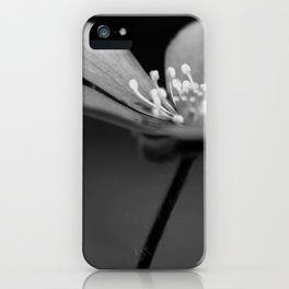 Blue spring flower Hepatica in bw III iPhone Case