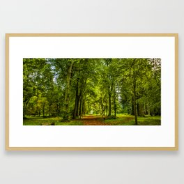 Woodland Pathway Framed Art Print