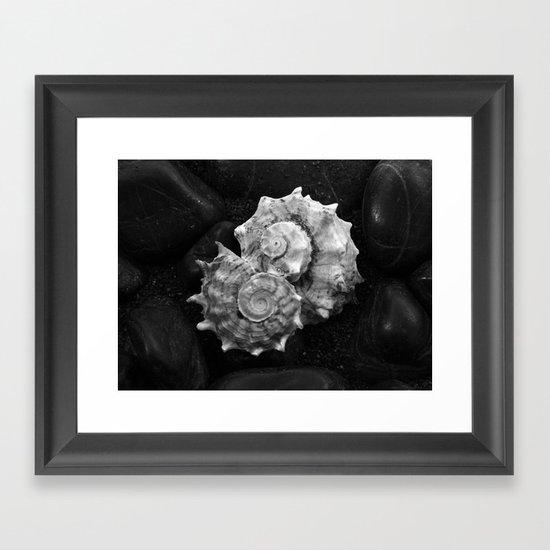 Shell No.3 Framed Art Print
