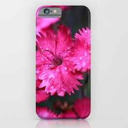 Pink Dianthus with Raindrops iPhone Case