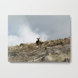 Deer amidst a destroyed forest Metal Print
