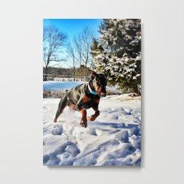 Doberman Dog in the Snow Metal Print