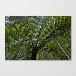 Giant Cycas Canvas Print