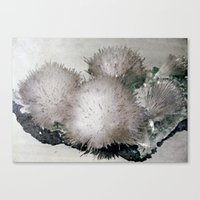 furry Canvas Prints featuring Furry Crystal  by Rem N