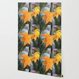 Longwood Gardens Orchid Extravaganza 71 Wallpaper