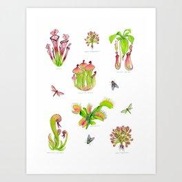 Carnivorous Plants Art Print