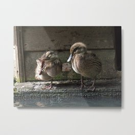 Happy duckling Metal Print