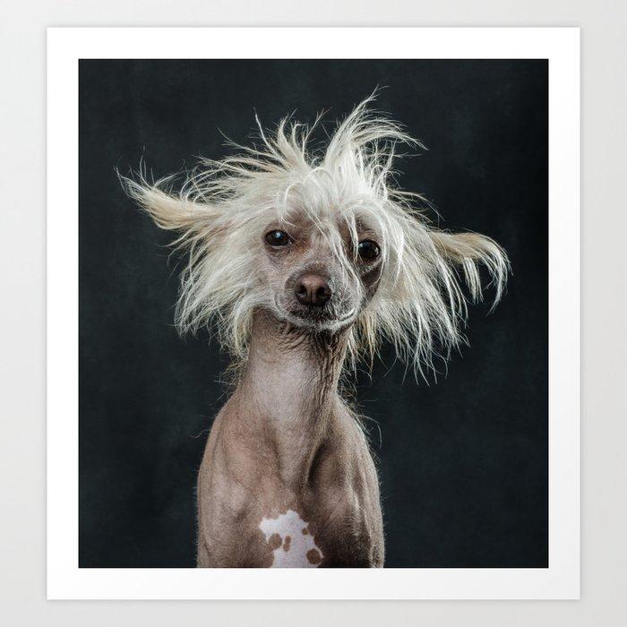 chinese crested Dog DeVito Portrait Kunstdrucke