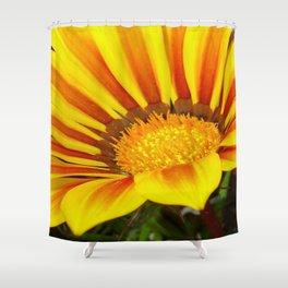 Orange and Rust Color Gazania Montezuma Macro  Shower Curtain