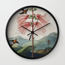 Flowering Sensitive Plant from The Temple of Flora (1807) by Robert John Thornton. Wall Clock