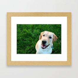 smiling yellow lab Framed Art Print