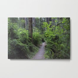 Follow the Path - See Where it Leads Metal Print