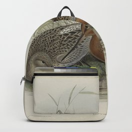 254 Limosa rufa. Bar tailed Godwit Backpack