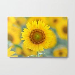 Summer Sunflower! Metal Print